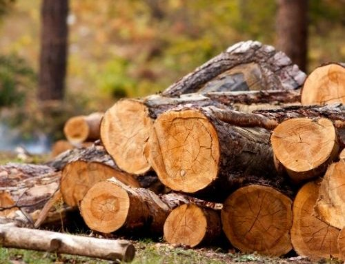 Illegal Logging – Penalties Now Apply